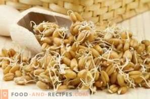 Come germinare il grano