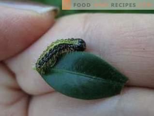 Lepidocide è un farmaco efficace contro i parassiti che mangiano foglie
