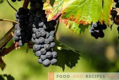 Chach dell'uva
